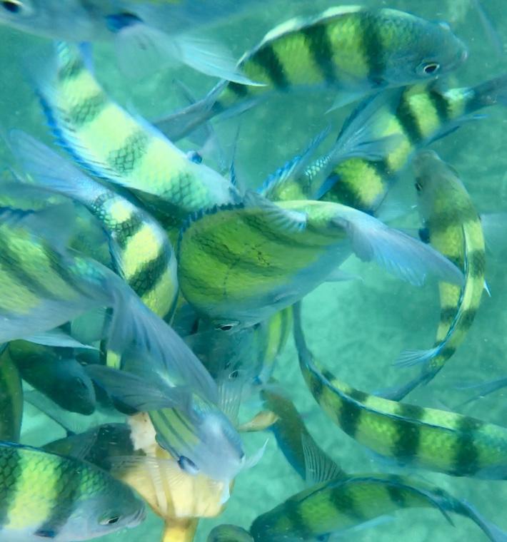 Snorkelling Phi Phi